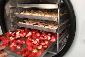 place fruit into freeze dryer chamber to do freeze drying