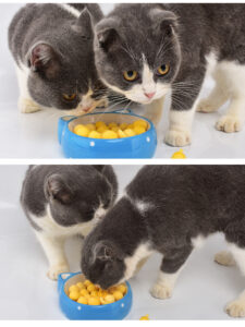 Two cats fought over the freeze-dried quail yellow